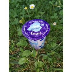 Yaourt Cassis